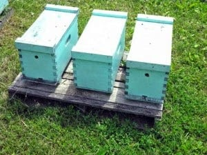 Tame mellow domestic Italian nucs for sale, $165
