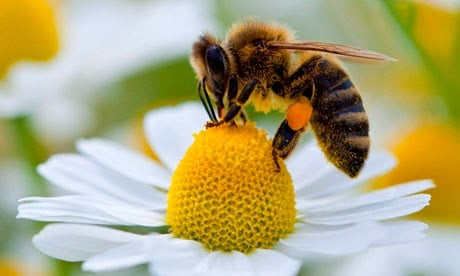 Plants for your garden if you want to help the bees